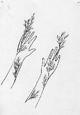 hands-ruth-herbert