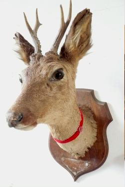 ma-poufiasse-deers-head2